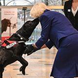 """Bei ihrem Besuch der """"British Transport Police"""" und """"Network Rail"""" am Bahnhof Paddington, bekommt Herzogin Camilla von diesem """"Medical Detection Dog"""" einenfeuchten Begrüßungskuss."""