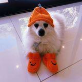 Hund Meeka liebt Halloween genauso sehr wie Frauchen Jenna Dewan.