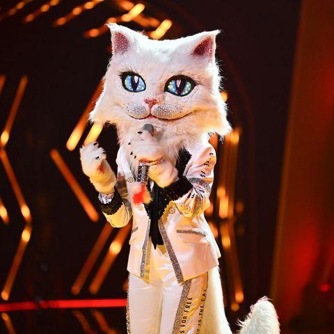 """The Masked Singer""-Katze"