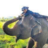 Nicht nur Hunde und Pferde haben es der Tochter von KönigMaha Vajiralongkorn angetan, sondern auch Elefanten. Mutig setzt sie sich auf einen drauf und postet den Schnappschuss von ihr auf Instagram.