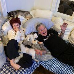 """Hundeverbot auf der Couch? Nicht bei den Osbournes! Die beiden Huskies kuscheln sich abends gerne zwischen Sharon und Rockstar Ozzy aufs Sofa und dürfen sogar ab und zu mit ins Bett. Das Instagram-Bild kommentiert die Moderatorin mit dem treffenden Begriff: """"Wohlfühlort""""."""