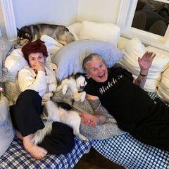 Seit 1982 sind die beiden bereits verheiratet, seit 40 Jahren ein Paar und schon seit 51 Jahren Freunde. Und daher können sich Sharons und Ozzys Instagram-Fans auch immer wieder über witzige Bilder der beiden freuen.