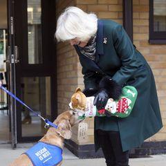 """Anlässlich der Eröffnung eines neuen Hundezwingers besucht Herzogin Camilla das Tierheim """"Battersea Cats and Dogs Home"""" westlich von London. Dort soll sie eigentlich als Schirmherrin eine Gedenktafel enthüllen - doch das läuft anders als geplant ..."""