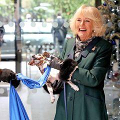 Der Grund: An dem Band ist ein Würstchen angebracht. Da kann Camillas Hündchen natürlich nicht widerstehen, will es aber auch nicht mehr loslassen. Die Herzogin nimmts mit Humor.