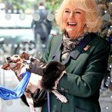 """Anlässlich der Eröffnung eines neuen Hundezwingers besucht Herzogin Camilla das Tierheim """"Battersea Cats and Dogs Home"""" westlich von London. Dort soll sie eigentlich als Schirmherrin eine Gedenktafel enthüllen - doch das läuft anders als geplant. Denn Jack Russell-Hündin Beth, die beim Termin mit dabei sein darf, übernimmt kurzerhand Camillas Job und schnappt sich das Tuch.Der Grund: An dem Band ist ein Würstchen angebracht. Da kann Camillas Hündchen natürlich nicht widerstehen, will es aber auch nicht mehr loslassen. Die Herzogin nimmts mit Humor."""