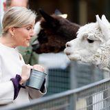 """Gräfin Sophie von Wessex besucht die """"Vauxhall City Farm"""" im Rahmen des Beginn de Black History Months in London und freundet sich mit diesem flauschigen Alpaka an."""