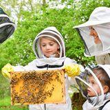 Zusammen mit der Bienenhüterin Lotta Fabricius Kristiansen überprüft Prinzessin Victoria mit ihren Kindern Prinzessin Estelle und Prinz Oscar die Bienenstöcke im Garten von Schloss Haga.Probiert wird der Honig natürlich auch.