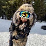 Die mit dem Wolf kuschelt, ist Nina Dobrev. Natürlich ist diese süße Fellnase keine wirklicher Wolf, sondern einer ihrer Schlittenhunde.