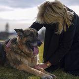Eine Streicheleinheit mit Frauchen auf dem Südrasen des Weißen Hauses – das lässt sich Schäferhund Champ gefallen! Er lebt seit 2008 bei den Bidens.