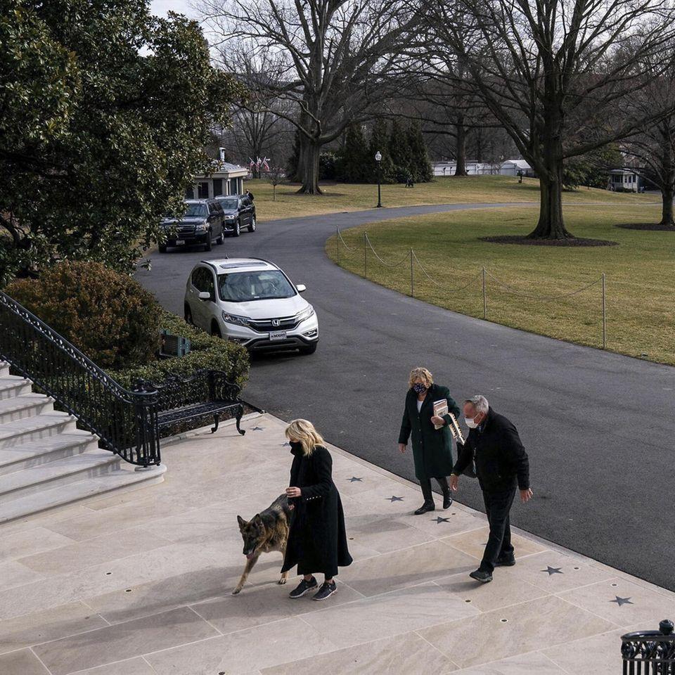 Zwei weitere Familienmitglieder der Familie Biden ziehen ins Weiße Haus ein. Der eine: Schäferhund Champ. Hierkommt er mit Frauchen Dr. Jill Biden entlang des Weges.