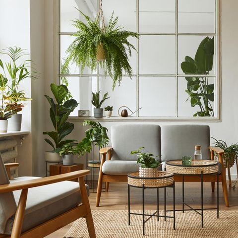 Wohnzimmer mit Pflanzen, Zimmerpflanzen, Urban Jungle