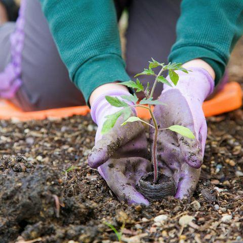 Wer seinen Garten schon im März pflegt, hat das restliche Jahr mehr von ihm.
