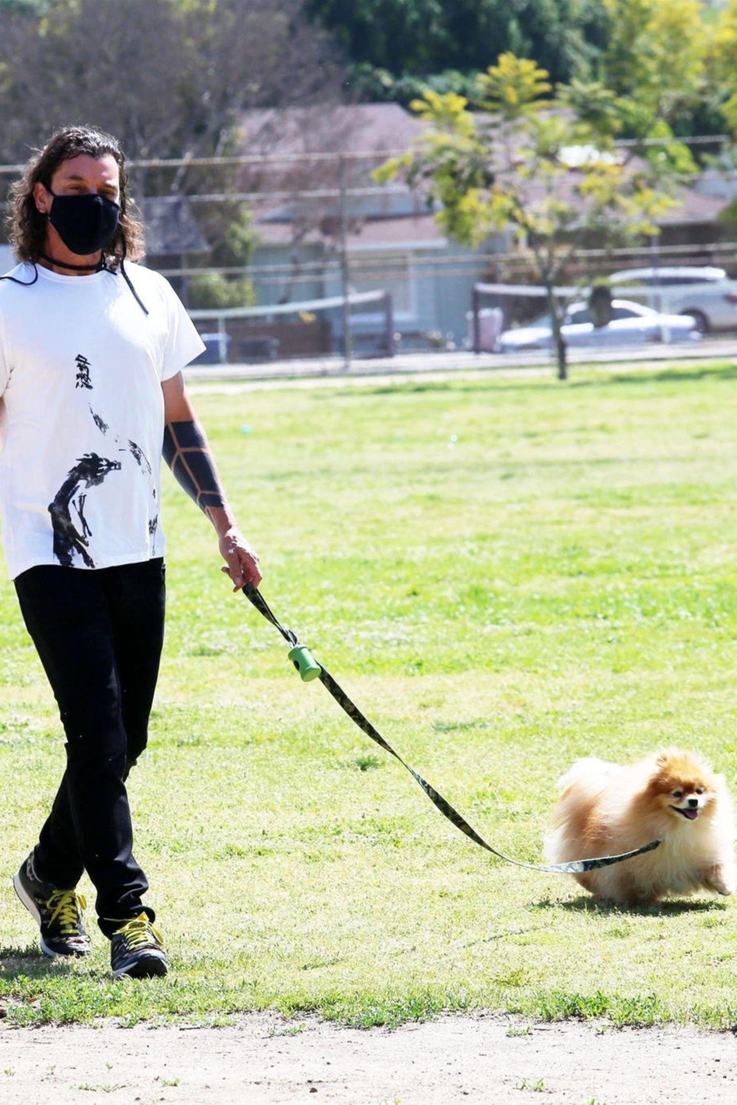 In Los Angeles wird Gavin Rossdale beim Gassigehen gesichtet. Während Hund Chewy voller Elan über die Wiese in Los Angeles flitzt, schlendert sein berühmtes Herrchen gemütlich nebenher. Lediglich die Leine verhindert, dass der flauschige Fellball außer Sicht gerät.