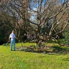 """""""Im letzten Jahr habe ich gelernt, dass man Pflanzen auch gießen muss, wenn die außen wohnen"""", verrät Maisie Williams. Das Instagram-Foto zeigt den """"Game of Thrones""""-Star beim Wässern ihrer bunten Blumen und Bäume im Garten."""