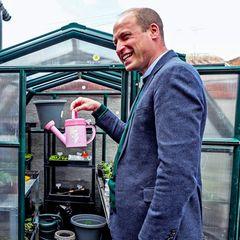 6. Mai 2021  Prinz William hilft bei seinem Besuch im Gemeindezentrum Brighter Futures in Nordwales gerne bei der Gartenarbeit mit. Dabei scherzt er ausgelassen mitden Mitarbeitern, während er ein rosa Gießkännchen in den Fingern hält. Oder hat er sich den kleinen Helferetwa vorabbei seinen Kindern ausgeliehen?
