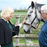"""Anschließendbesucht Herzogin Camilla das """"Horses for People"""" Gestüt in Comber und freut sich sichtlich darüber,mit den sanftmütigen Pferden in Kontakt zu kommen."""