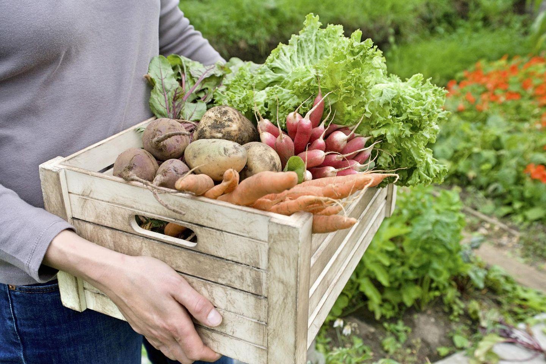 Gärtnern Schritt für Schritt: So gelingt der eigene Gemüsegarten