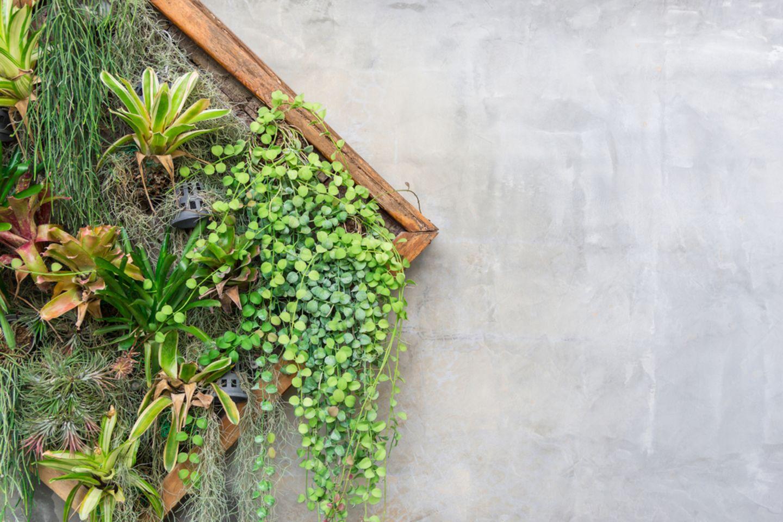 Vertikaler Garten für den Balkon: So klappt Gärtnern auf wenig Raum