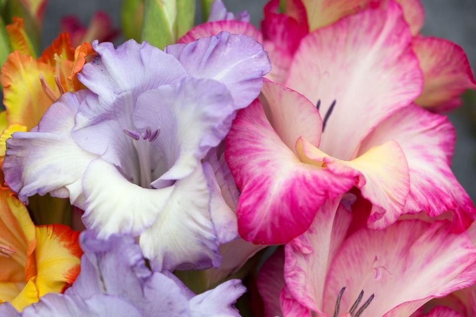 Geburtsblume: Welche ist Ihre?
