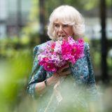 """Auch bei Herzogin Camilla dreht sich heute alles um die schönsten Blüten. Sieeröffnet die """"British Flowers Week 2021"""" im Garden Museum in London. Zum Empfang gibt es einen tollen Blumenstrauß für die Herzogin in zarten Pinktönen."""
