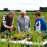 VonIan und Celene Wilkinson, den Gründern von FarmEd, lässt Prinz Charles sich in die Geheimnisse des perfekten Ackerbodens einweihen.