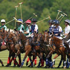 Das Poloteam von Prinz William steht bereit!Gemeinsam galoppieren sie für den guten Zweck über den Rasen.