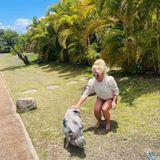 Wilde Tiere: Britney Spears mit Schwein