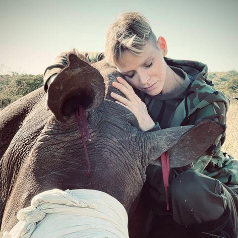 Fürstin Charlènewährend ihrer Reise nach Südafrika für eine Naturschutzmission im Mai 2021, bei der sie sich besonders für härtere Maßnahmen gegen die Nashorn-Wilderei einsetzte.