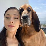 Warum denn die langen Gesichter? Auf Fotos lachen die darauf Abgebildeten meistens – nicht so Ariana Grande. Die Sängerin posiert mit HundLafayette auf der Dachterrasse und lässt sich lediglich ein klitzekleines Lächeln abluchsen. Ihr scheint's zu gefallen, denn die Social-Media-Königin kennt sich mit Likes und Followern bestens aus und kassiert auch für dieses Selfie jede Menge Herzchen.