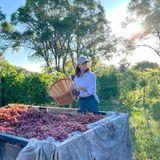 """Umringt von wundervollen Weinreben und roten Trauben hilft Eva Longoria bei der Ernte. Auf Instagram teilt die Schauspielerin dabei die wichtige Botschaft, dass man den Farmarbeiterneine größere Wertschätzung entgegenbringen soll und unterstützt damit die Organisation """"Healing Voices"""", die sich kostenlos um die psychische Gesundheit der Gemeinden in Kalifornien kümmert."""