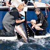 """Es kann losgehen! Der große Thunfisch wird von der Crew an Board geholt und für die Markierung vorbereitet. Prinz Frederik beobachtet fasziniert die geschickten Handgriffe des """"DTU Aqua im Skagerag"""" Mitarbeiters."""
