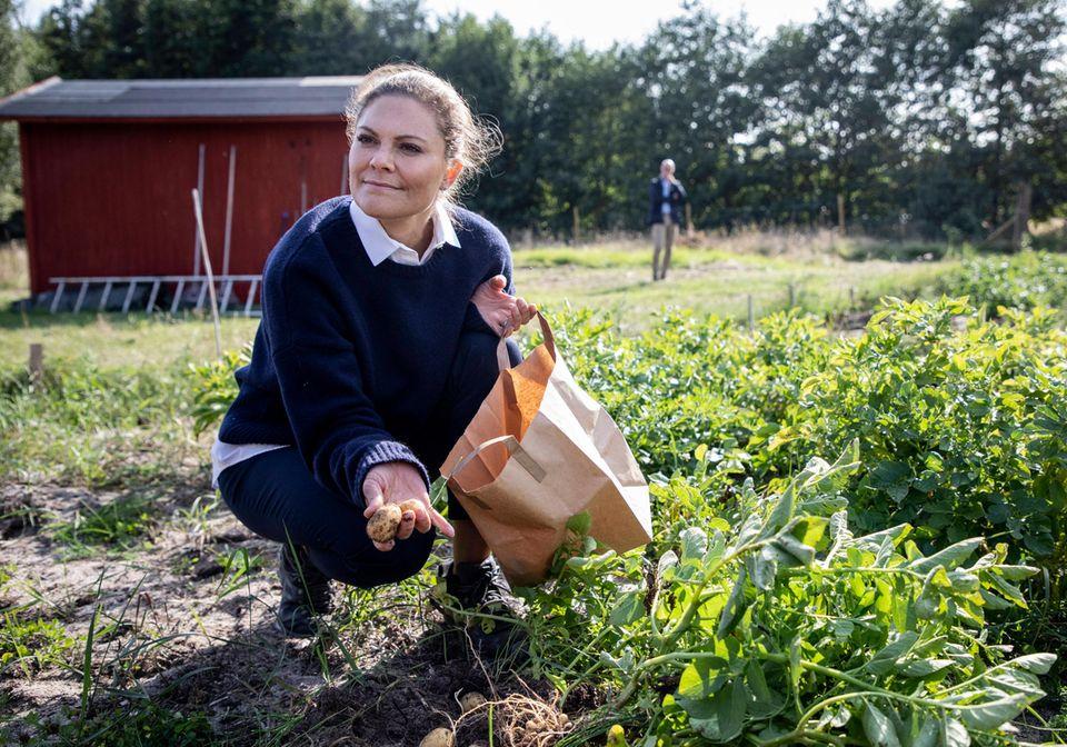Zu guter Letzt darf Victoria sich bei ihrem Inselbesuch auch noch die Hände richtig schmutzig machen. Kein Problem für die Prinzessin, gekonnt gräbt sie auf dem angelegten Feld frische Kartoffeln aus.