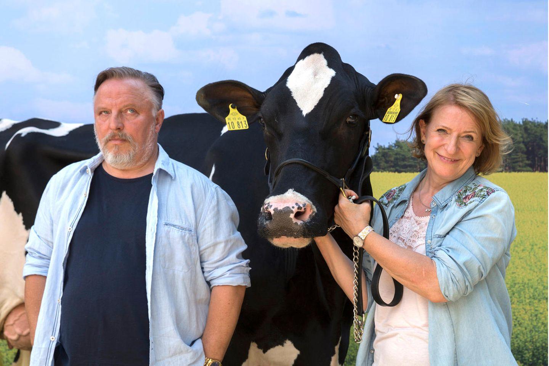 Thomas (Axel Prahl) weiß: Die Kuh Gloria ist der Liebling seiner Schwester Jutta (Dagmar Manzel)