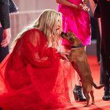 Hollywuff: Kate Hudson mit Hund Benny bei Filmpremiere