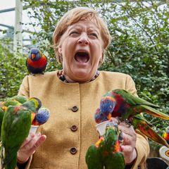 Stars mit wilden Tieren: Angela Merkel im Vogelpark Marlow mit Papageien
