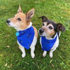 """Mit ihren blauen """"Battersea""""-Halstüchernmachen Bluebell und Beth auf den Aktionsmonat der Organisation aufmerksam. Dieser widmet sich all den wunderbaren Haustieren, die auf ein neues Zuhause warten."""