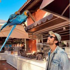 Max Giesinger mit Papagei
