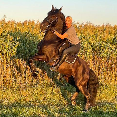 Stars lieben Pferde: Sarah Connor und ihr Friese