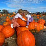 Kürbisse: Nicky Hiltons Töchter sitzen auf Kürbsissen